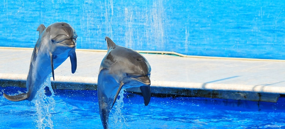 ¿Qué es La Dolphin Connection?